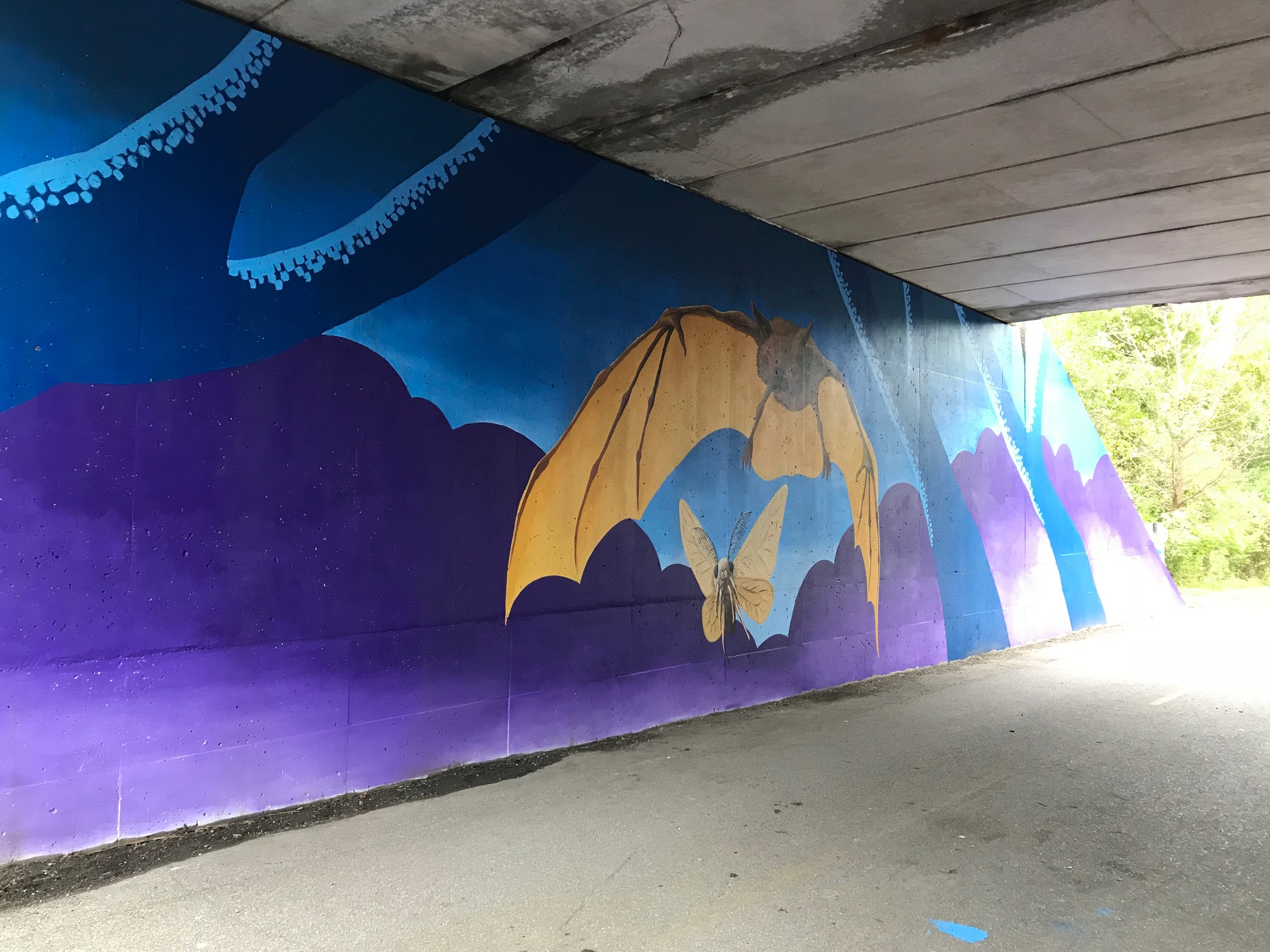 Endangered Species Mural Project : Indiana Bat